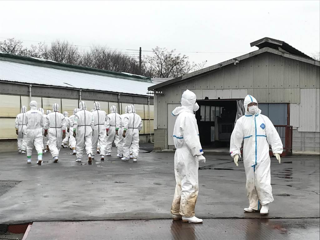 養豚場に向かう作業員ら=6日、滋賀県近江八幡市(滋賀県提供)