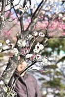 甲府・不老園で早咲きの梅満開