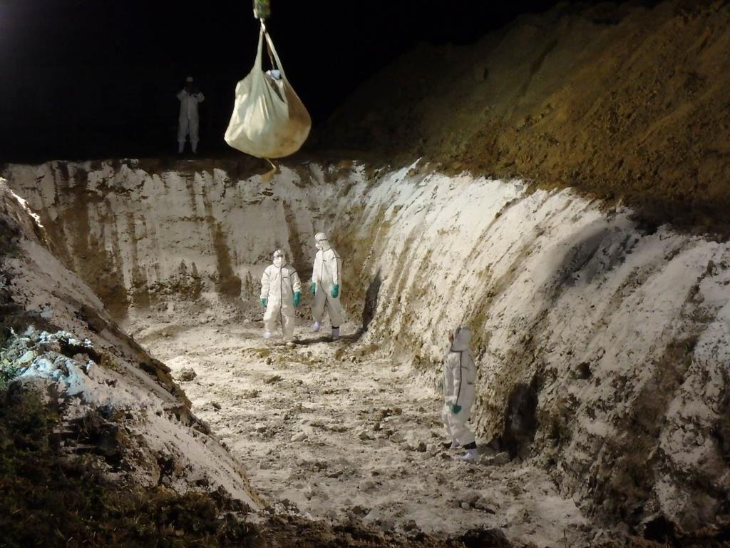 クレーンを使って殺処分した豚を地中に埋める作業員ら=6日夜、滋賀日野町(滋賀県提供)