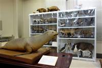 博物館の新設困難、九大「収蔵品の散逸は防ぐ」