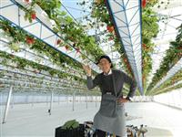 兵庫県内初「農家レストラン」オープン 淡路・野島常盤の高台を造成