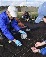 【ZOOM東北】岩手発 イネの初冬直播き栽培実験本格化 省力化 農家の救世主
