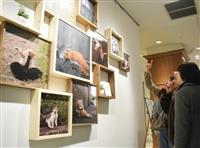 猫の姿に癒やされ 神戸出身の写真家・沖さん、地元で初の作品展