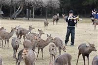 ホルンの音色にシカもうっとり? 奈良公園で「鹿寄せ」