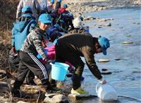「元気に戻ってきて」 大田原で児童らがサケ稚魚放流