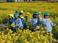 園児ら菜の花摘み天ぷら試食 都志で「春一番 まつり」楽しむ 兵庫