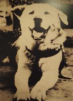 ハチ公「正面写真」初展示 渋谷区郷土博物館 昭和8年ごろ撮影
