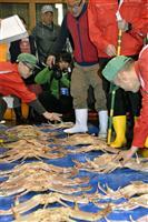 若松葉ガニの単価3.6倍に 豊漁→漁獲規制の強化が影響 鳥取