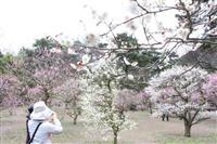 春感じる梅の香り 栗林公園