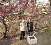震災復興と沖縄との絆…神戸にヒカンザクラの石碑設置