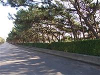 【日本再発見 たびを楽しむ】広大な敷地 心地よい海風でリフレッシュ~稲毛海浜公園(千葉…
