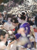 【動画あり】道真ゆかりの梅花祭 北野天満宮 芸舞妓のお手前も