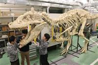 アジア最大級の肉食恐竜「タルボサウルス」全身骨格披露 岡山理大生が組み上げ、2日から一…