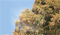 花粉を9割カット 全館空調で家の空気をいつもきれいに