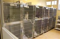 命の大切さ伝える施設に 高松・動物愛護施設「しっぽの森」オープン 殺処分率改善に期待