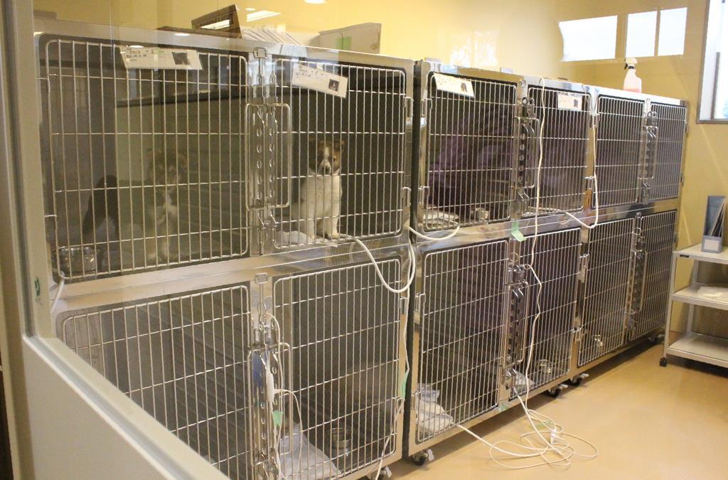 犬猫を飼養する譲渡動物部屋
