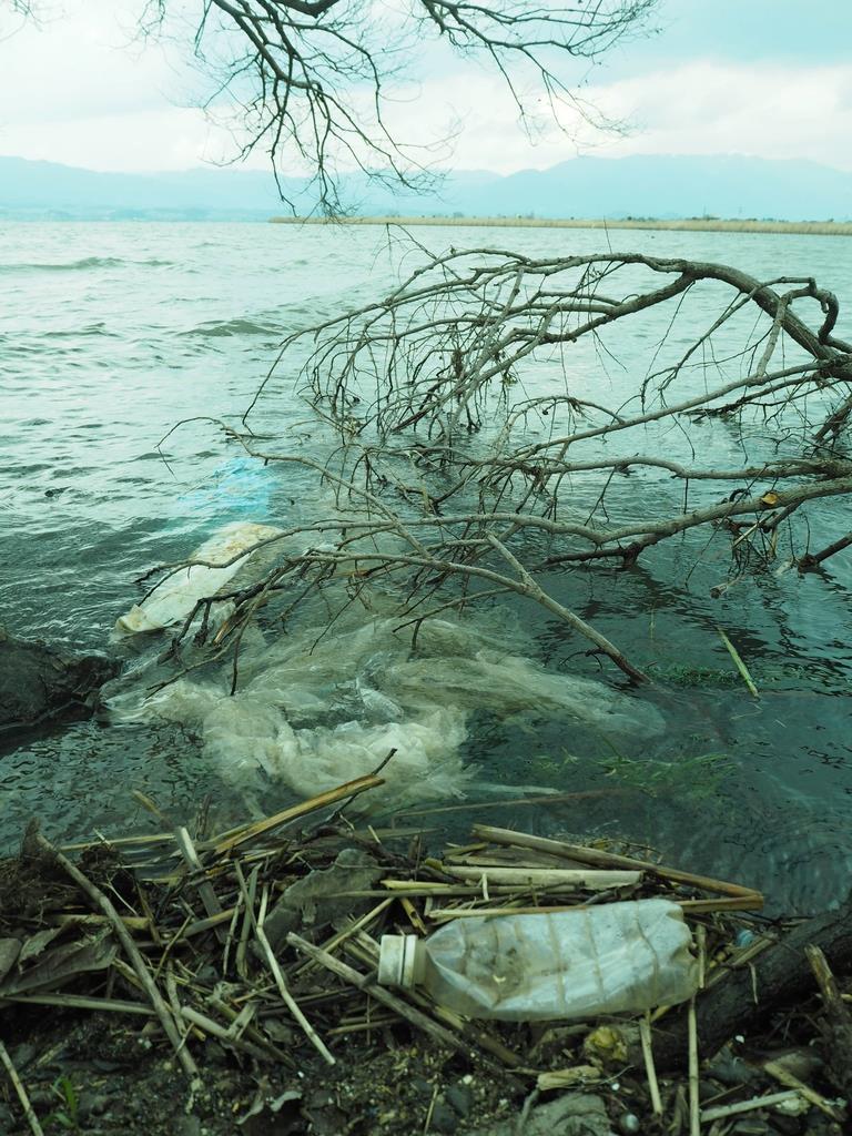 琵琶湖岸に打ち寄せられたペットボトルなどのプラスチックごみ=12日、守山市の赤野井湾付近