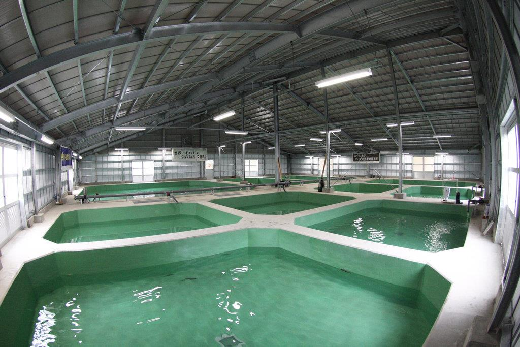浜松市春野町に構えたチョウザメ養殖場