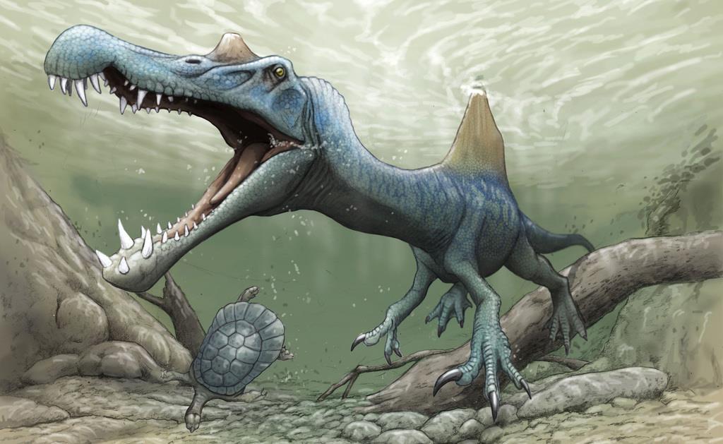 スピノサウルス類のイメージ(古生物イラストレーター川崎悟司氏提供)