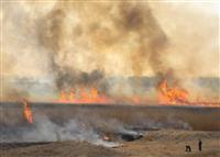 広大なヨシ原に広がる炎、立ち上がる煙 渡良瀬遊水地でヨシ焼き