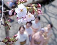温暖化で早まるサクラの開花 都心では入学式の記念撮影難しく