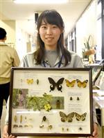 東京・葛飾で採集、56種337匹の昆虫標本 貴重なトンボも