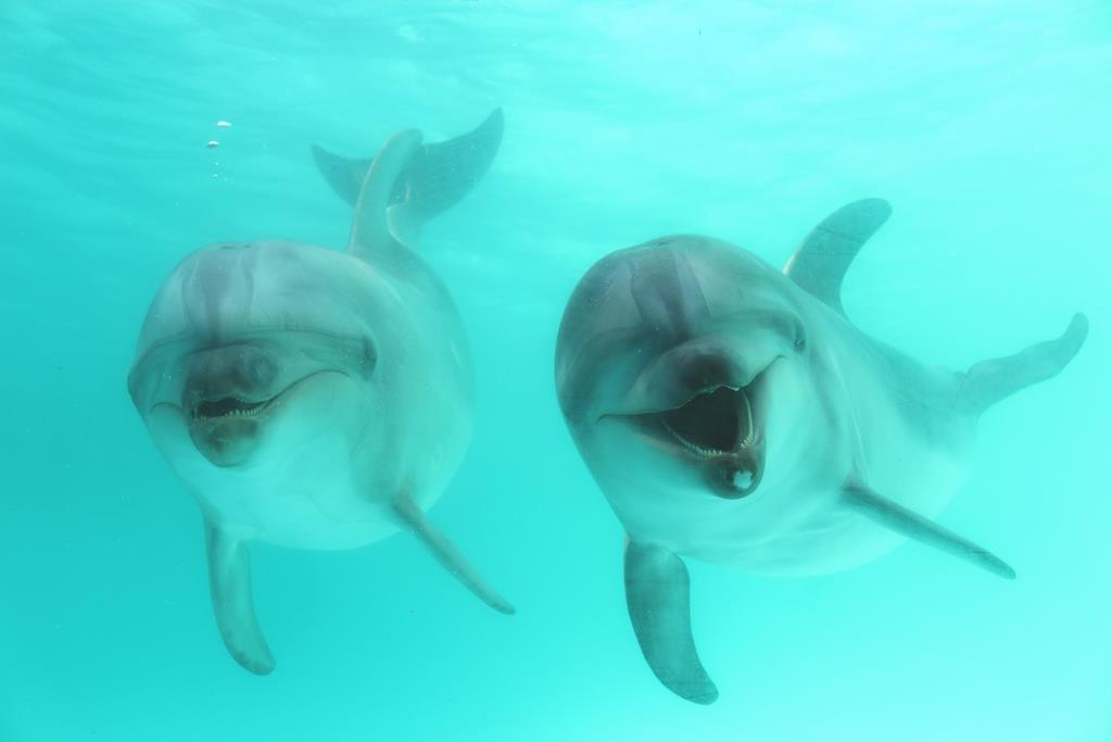 水中窓から見えるイルカたち。向かって右はスマスイ生まれのロクマル、左は一番年の近い遊び仲間のケイト