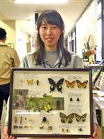 葛飾区内の昆虫56種337匹が標本に
