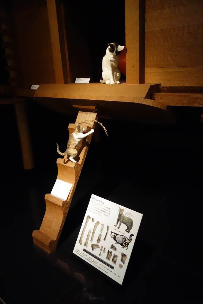 ネコの渡来は弥生時代だった 歴博展示室が36年ぶり刷新