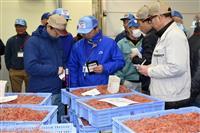 静岡でサクラエビ初競り 禁漁区設定、資源回復図る