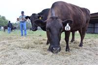 冷凍牛肉、セーフガード基準に迫る 日米貿易交渉への影響を警戒