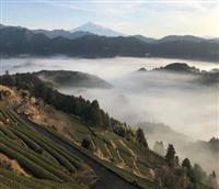 【大人の遠足】静岡・清水 茶畑から望む富士と雲海 「和紅茶」に癒やされて