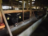 牛の出荷制限解除 岩手、福島など4県