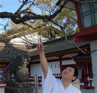 新元号「令和」 日本人の心の原点 「万葉の里」太宰府、喜びに沸く