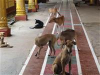 犬だけではない「狂犬病」 海外旅行、動物とのふれあい要注意