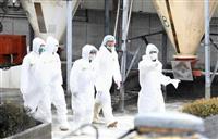 愛知で新たに豚コレラ 瀬戸市の養豚場