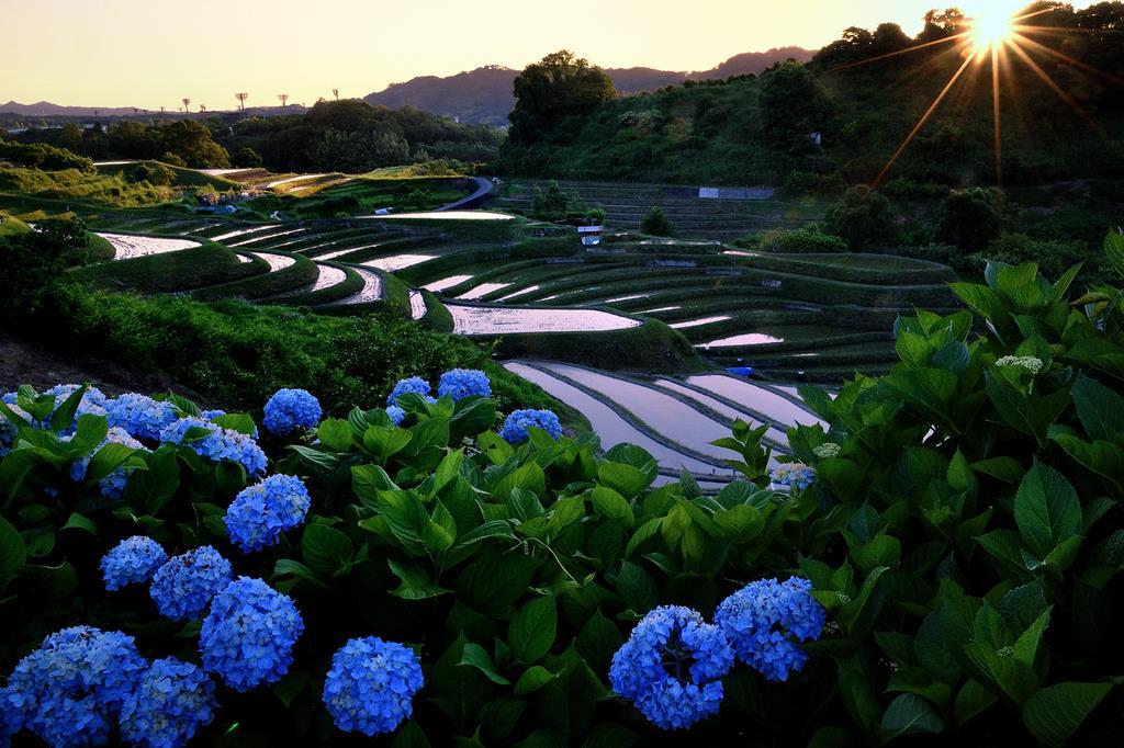 水をたたえた下赤阪の棚田。夕陽や周囲のアジサイ…すべての要素が「日本の原風景」を生み出す=大阪府千早赤阪村(同村提供)