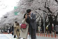 【ソウルからヨボセヨ】「桜解禁」の理由は…