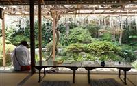 春風に揺れる薄紫の花房 松山・庚申庵史跡庭園できょうから「ふじまつり」
