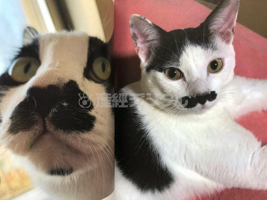 80年代半ば、口ひげを蓄えたフレディ・マーキュリーを思わせる可愛い猫たちの写真を集めた「ボヘミニャン・ラプソディ」(シンコーミュージック・エンタテイメント) https://www.shinko-music.co.jp/item/pid0622898/