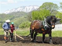 「馬耕」復活へ滝沢市で実証実験スタート