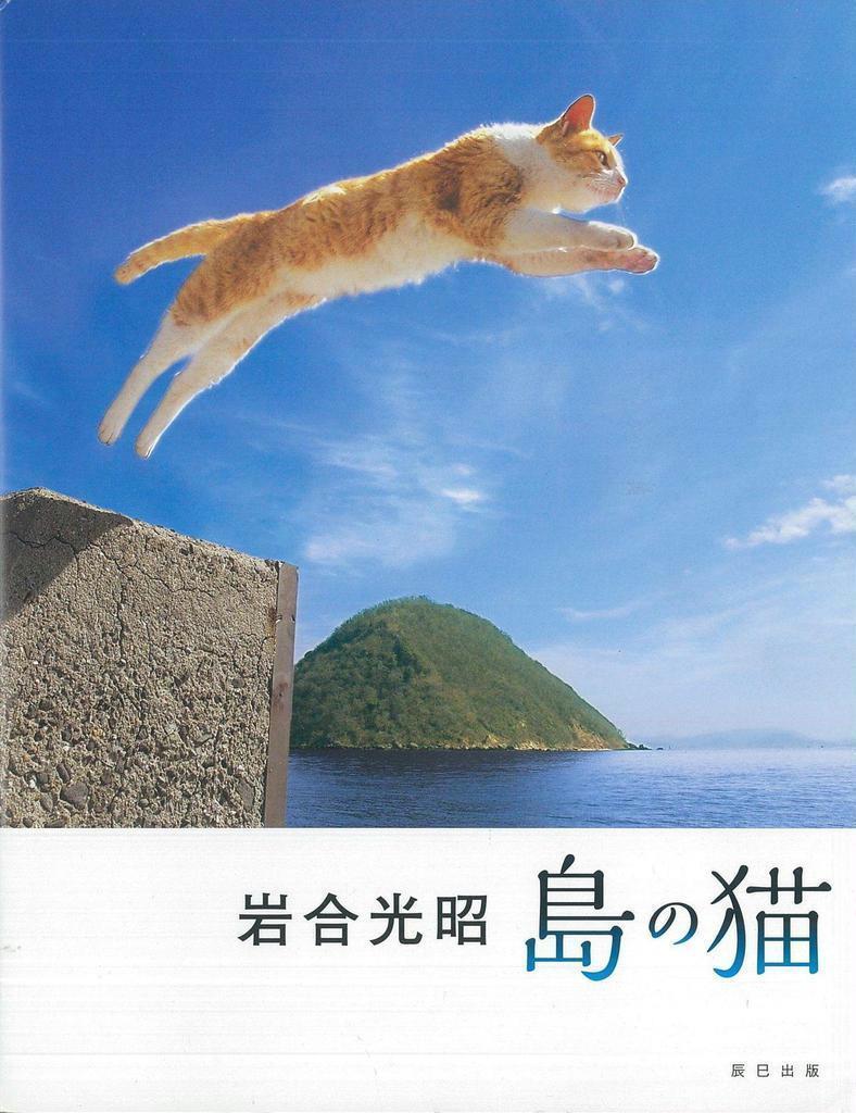 「人と同じで、南国のネコはのんびり、ゆったりしてますね」(古厩正樹撮影)