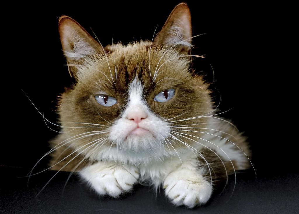 死んだ不機嫌顔の雌猫=2015年12月(AP)