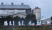愛知・田原の養豚場で殺処分完了 豚コレラ、約4700頭