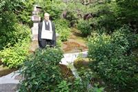 アマチャの庭を楽しんで 京都・霊源院で「甘露庭」特別公開