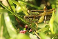 【エンタメよもやま話】ウジ虫、バッタ、ゴキブリ… 人口激増の世界を救う昆虫食