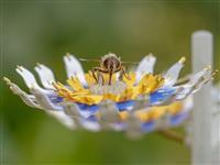 """""""人工花""""が都市の昆虫を救う:オランダ人デザイナーが実践する「自然回復のデザイン」"""