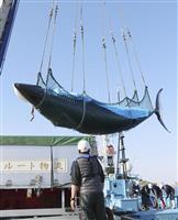 太平洋沿岸の調査捕鯨終了 6月からは網走沖で