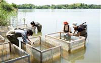 【絶滅危惧種を守れ(4)完】発見から60年弱で絶滅…コシガヤホシクサの野生復帰を目指し…