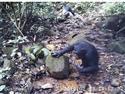 【動画あり】チンパンジーもカニ好き 食べる様子初確認 京大など